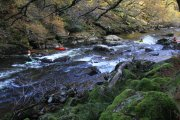 White Wood River Dart Walk, Holne, Dartmoor National Park