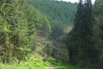 Fingle Woods Halls Cleave/Cod Wood Circular Walk, Drewsteignton, Dartmoor National Park