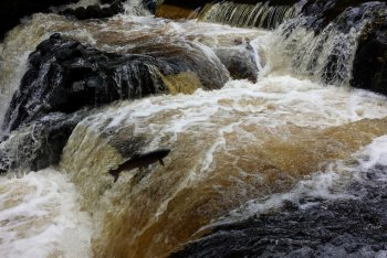 Salmon Leaps, Castle Drogo Weir and Drewe's Pool, Chagford, Dartmoor National Park