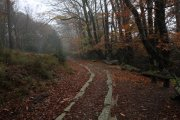 Yarner Wood Templer Way Walk, Bovey Tracey, Dartmoor National Park