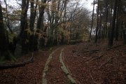 Yarner Wood, Bovey Tracey, Dartmoor National Park