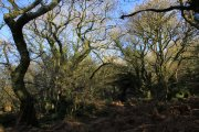 Shaptor Woods, Bovey Tracey, Dartmoor National Park