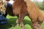 The Miniature Pony Centre, Moretonhampstead, Dartmoor National Park