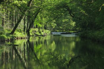 Hembury Woods Circular Walk, Buckfast, Dartmoor National Park