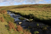 River Plym, Dartmoor, Dartmoor National Park