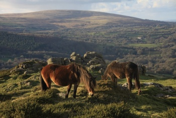 Best Chagford Walks, Chagford, Dartmoor National Park