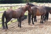 Dartmoor Pony Heritage Trust Education and Visitor Centre, Bovey Tracey, Dartmoor National Park