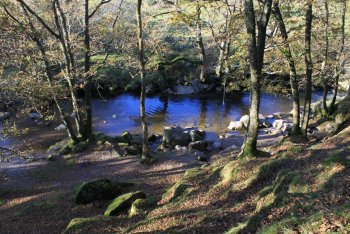 North Wood (The Dewerstone area), Shaugh Prior, Dartmoor National Park