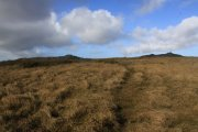 Ugborough Moor, South Brent, Dartmoor National Park